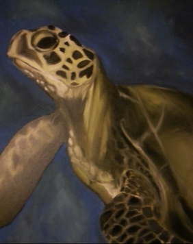 """Turtle"", Oil (SOLD)"